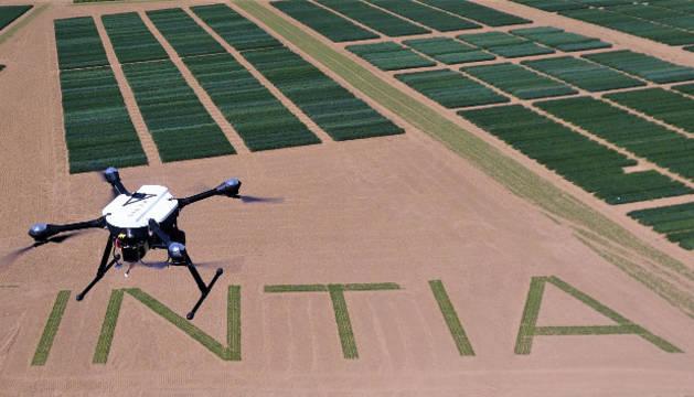 Imagen de un dron sobrevuela los ensayos de experimentación de INIA en Orkoien.