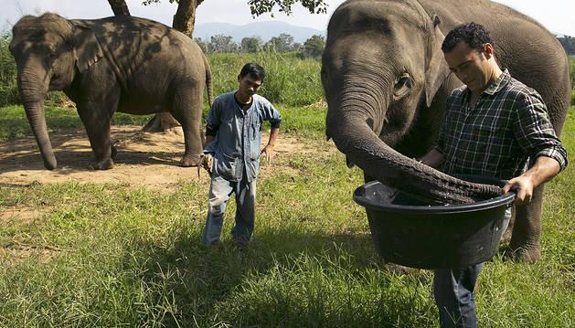 El elefante coge el relevo de la civeta en el café más caro del mundo