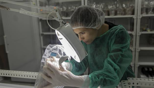 Una técnica de Gurelan analiza la bolsa de micelio.