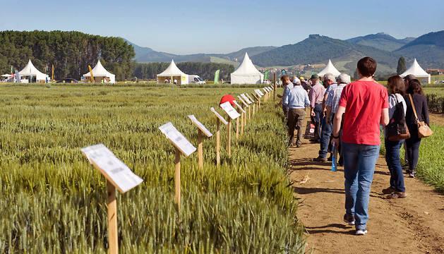 Imagen tomada durante las jornadas sobre innovación y transferencia del conocimiento en cultivos extensivos de invierno desarrollada esta semana en Orkoien.