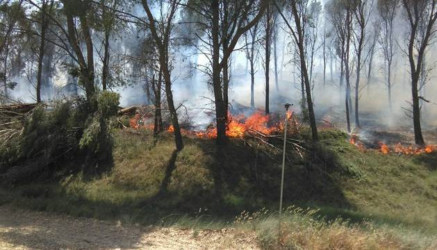 Imagen del fuego en el pinar de Falces.