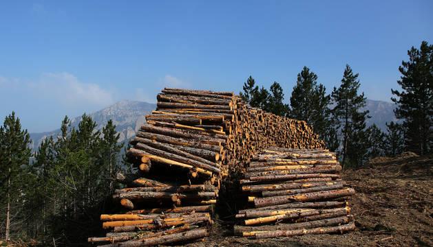 Una pila de troncos de pino laricio obtenidos en una extracción maderera en el término de Azuelo, con la sierra de Codés al fondo.