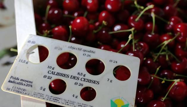 Cultivo de cerezas en Milagro y en el valle de Echauri.