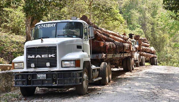 Camiones que transportan madera en el municipio de San Andrés, Péten (Guatemala).