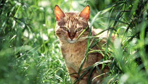 Un gato en actitud de observación
