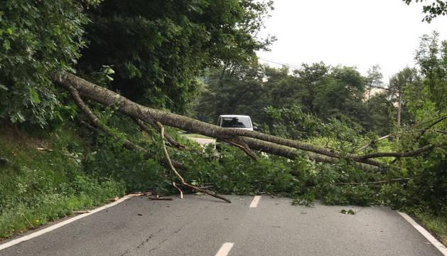 Foto de un árbol caído en la NA-411.