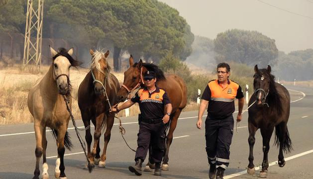 Unos caballos siendo evacuados del incendio por miembros de Proteccion Civil