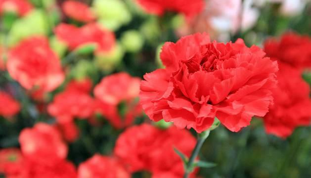 Llamó la atención de los agentes la corta trayectoria de la empresa a la que iban destinadas las flores.