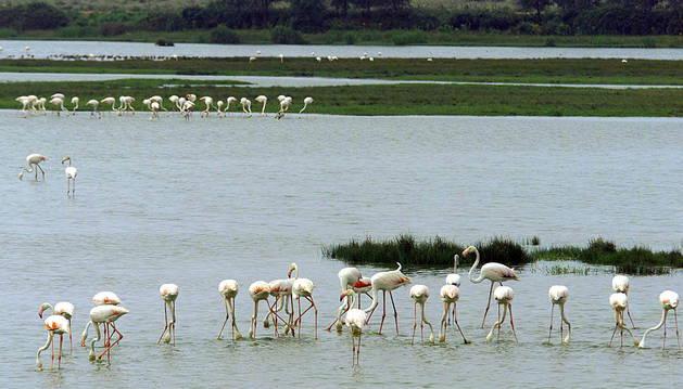Foto del espacio Natural de Doñana