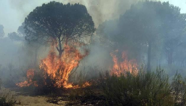 Imágenes del fuego que ha afectado a localidades como Mazagón o Matalascañas.