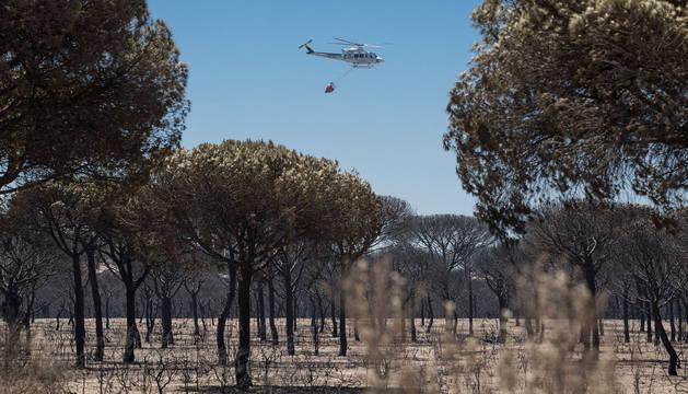 Un helicóptero del INFOCA sobrevuela un pinar completamente calcinado entre Moguer y Mazagón.