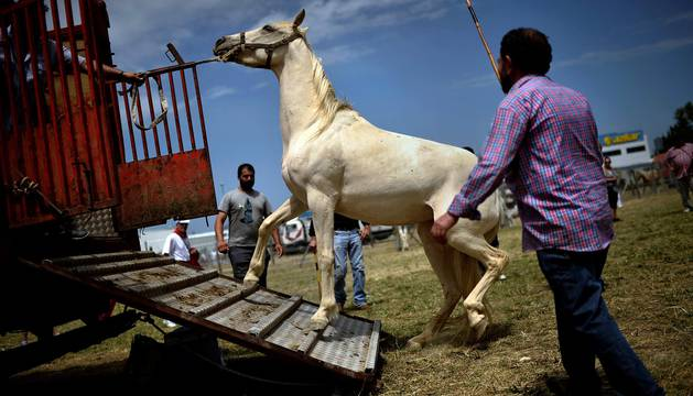 Feria de ganado equino de San Fermín