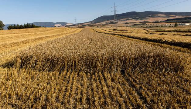 Los campos con daños por heladas o granizo dejan una zona como testigo para que valoren los peritos.