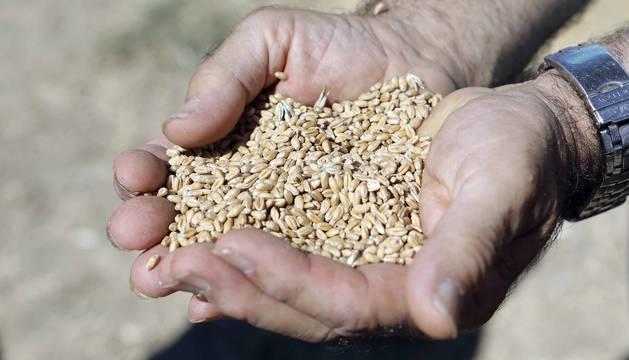Miranda de Arga es un pueblo de tradición agrícola, pero hoy sólo seis vecinos se dedican en exclusiva a esta actividad. La localidad celebró ayer la XVIII edición de su Día del Mundo Rural para preservar una forma de trabajar de siglos.