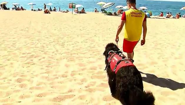 Imagen de un equipo de salvamento acuático formado por un socorrista y un perro entrenado para rescatar personas en el mar.