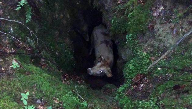 El animal llevaba varios días atrapado en una sima.