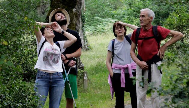 Imagen de varios visitantes observando los pájaros que sobrevuelan los robles de Orgi (2016).