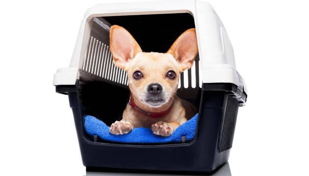 Un perro viaja en una cesta apta para transportarlo.