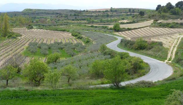 Foto del paisaje agrícola en mosaico en la zona elegida como área piloto.
