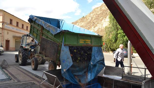 Un tractor deposita la uva recogida en las instalaciones de la Cooperativa San Gregorio de Azagra.