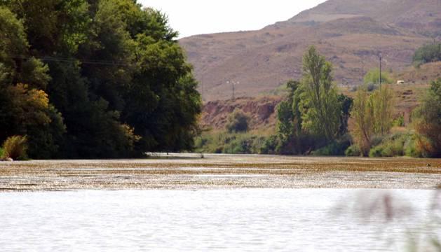 Barrera de algas, en el río Ebro.