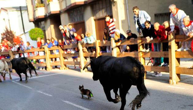 Imagen de un perro saltó al recorrido del encierro y se puso por delante de uno de los toros.