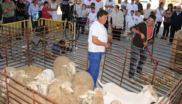 Foto de la fiesta de la Trashumancia en Carcastillo.