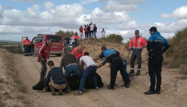 Imagen del momento en el que agentes de Policía Foral y Policía Municipal consiguen atrapar a la res fugada.