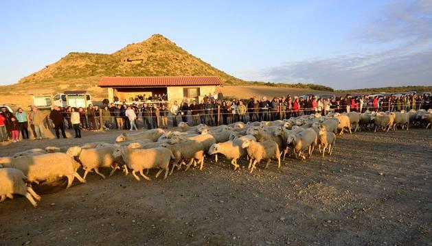 La fiesta de la trashumancia, a la que asistieron más de 200 personas, se adelantó un día para aprovechar la jornada dominical