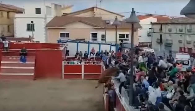 Imagen del momento en el que una de las vaquillas salta al público en Santacara.