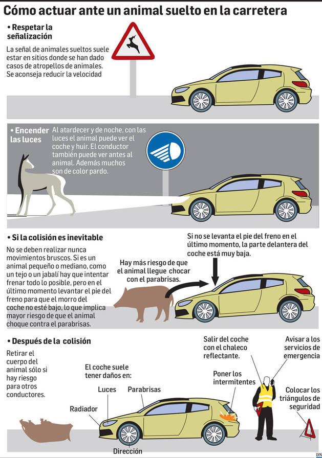 Infográfico de pasos sobre cómo actuar ante un animal suelto en la carretera.