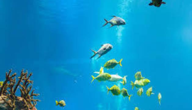 La temperatura del mar está subiendo por el cambio climático