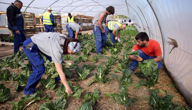 Escuela-taller de agricultura ecológica promovida en 2016 por la agrupación 'Calibus' de ayuntamientos de Ablitas, Barillas, Monteagudo y Tulebras. Formó a 15 parados riberos.