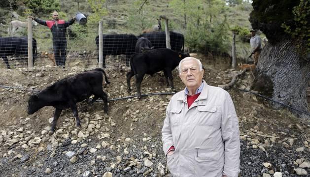 Joaquín Elizalde delante de uno de los ejemplares de wagyu y de las vacas angus preñadas que cuidan en el señorío de Adériz.