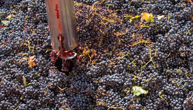 La vendimia en la denominación de origen Calificada Rioja está en su recta final.