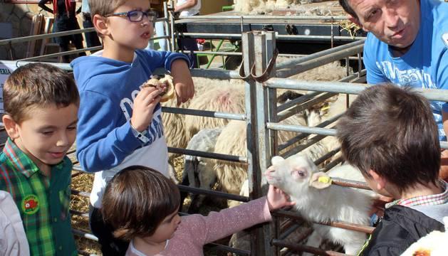 Galería de imágenes del día del pastor en Améscoa