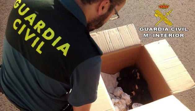Imagen de un agente de la Guardia Civil con los cachorros encontrados en un saco.