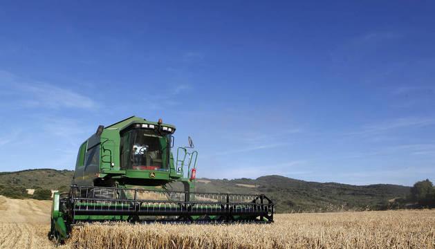 Una cosechadora realiza labores de recogida de grano en un campo allá por el pasado mes de julio.