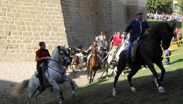 Día del caballo en las Ferias de Marcilla