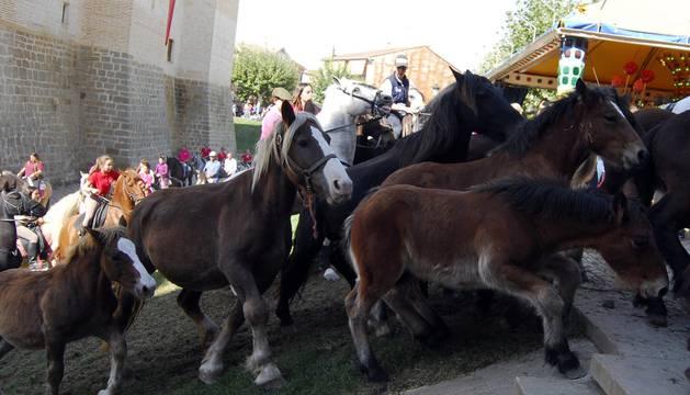 Día del caballo en Marcilla