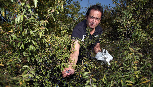 Con la mano extendida, Iñigo Ániz Goñi muestra unos arañones recién recogidos de una mata en una franja de terreno próxima a una de las urbanizaciones de Sarriguren.