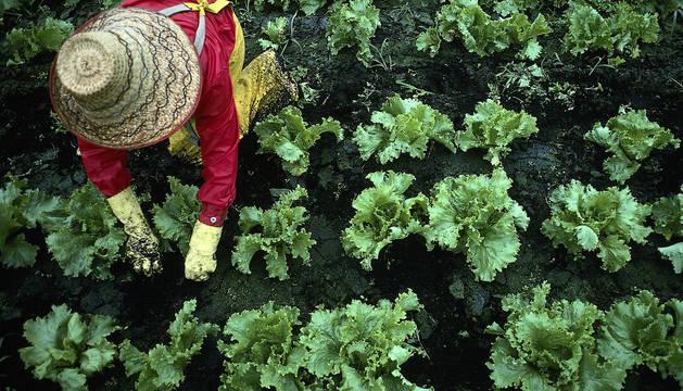 Una agricultora trabaja en una huerta.