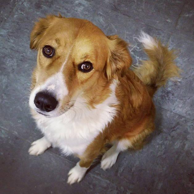 Imagen de Maya, la perrita de Alberto, que fue envenenada en La Taconera.