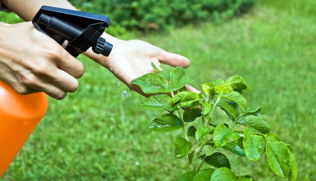 Abono de pesticidas contra las plagas en la agricultura
