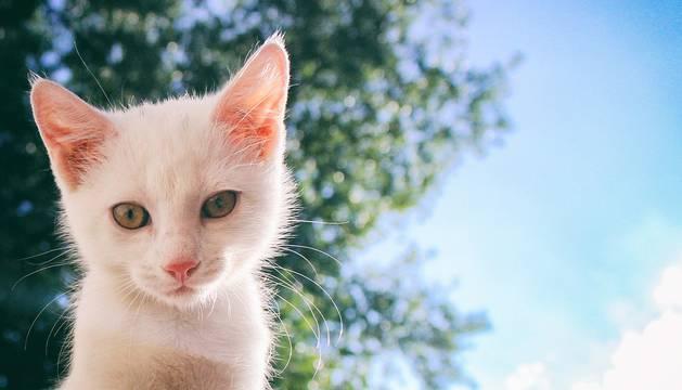 Fotografía de un gato blanco