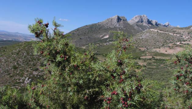 Imagen de la Sierra Arana, en Granada, donde se encontró la necrópolis.