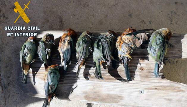 Algunas de las aves incautadas.
