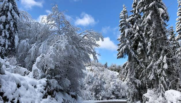 Fotos de la nevada caída este sábado en el norte de Navarra, con 16 centímetros de espesor en Roncesvalles y 30 en Abaurrea Alta.