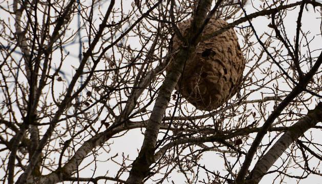 foto de Un nido de avispón en las ramas de un árbol.