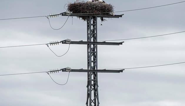 foto de Imagen de un tendido eléctrico, con un nido en su parte más alta.